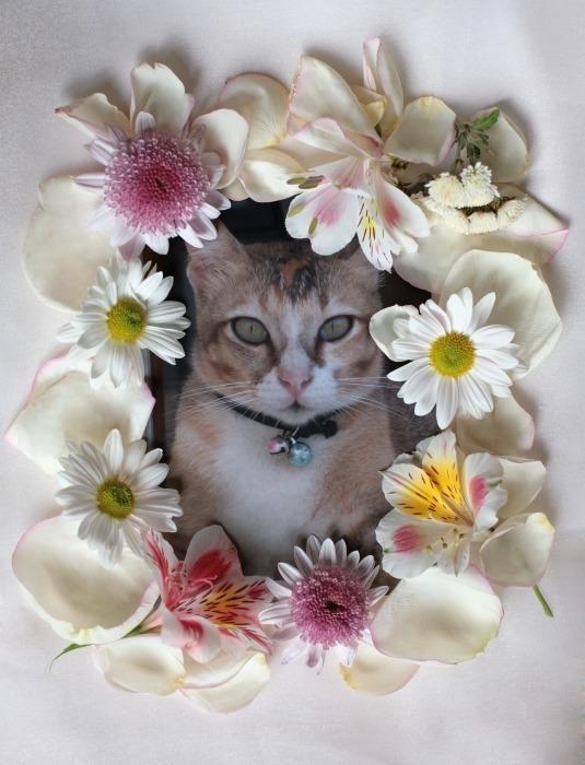 CHAR in flower.jpg