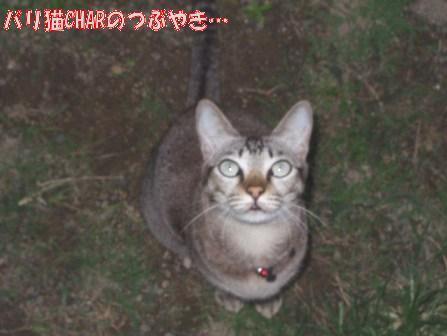 ブログ20100830-2.JPG