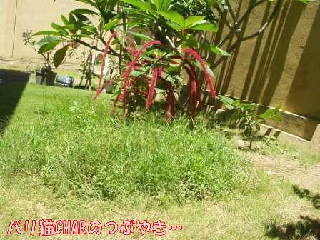 ブログ20100831-1.JPG