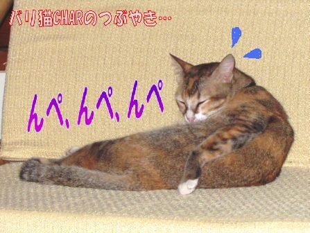ブログ20100926-1.JPG