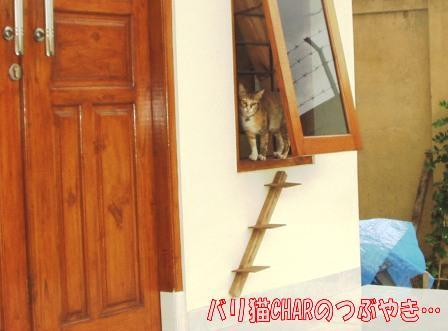 ブログ20100927-5.JPG