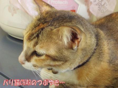 ブログ20100928-1.JPG