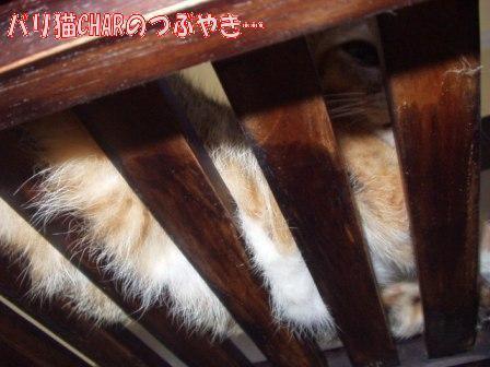 ブログ20100929-3.JPG