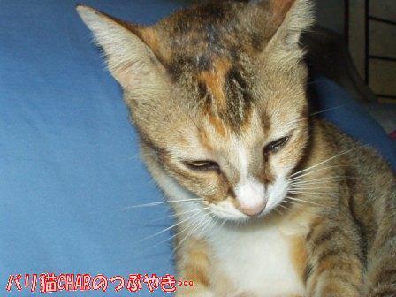 ブログ20101026-1.JPG