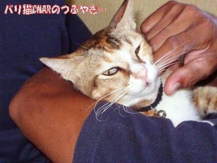 ブログ20101026-5.JPG
