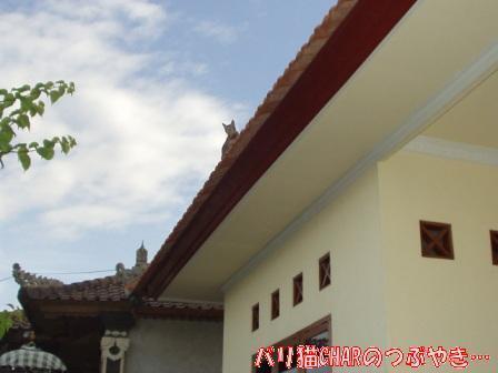 ブログ20101029-3.JPG