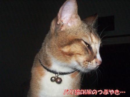 ブログ20101030-1.JPG
