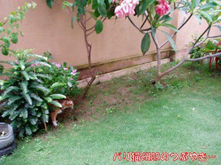 ブログ20101031-1.JPG