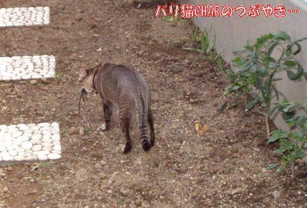 ブログ20101031-2.JPG