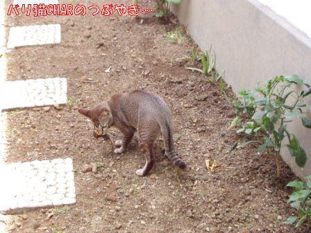 ブログ20101031-3.JPG
