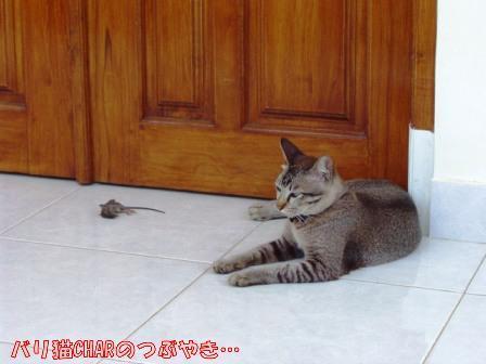 ブログ20101031-6.JPG