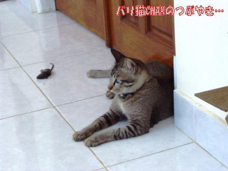 ブログ20101031-7.JPG