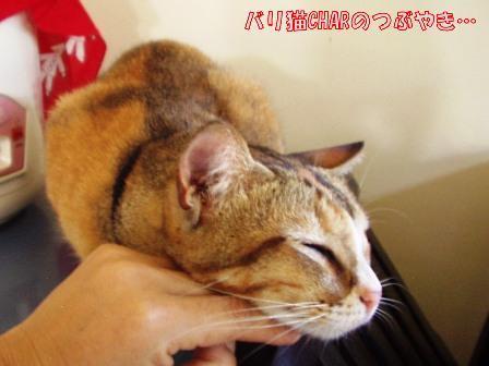 ブログ20101126-1.JPG