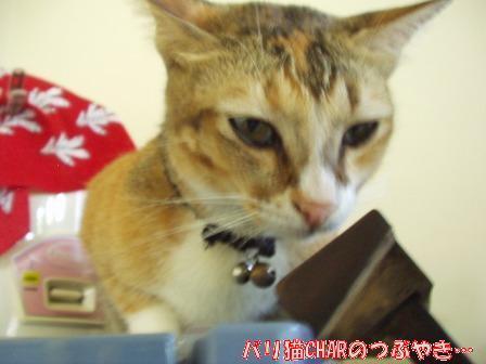 ブログ20101126-2.JPG
