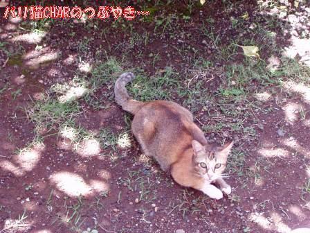 ブログ20101127-1.JPG