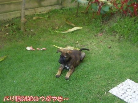 ブログ20101127-3.JPG