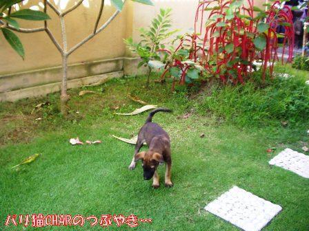 ブログ20101127-4.JPG