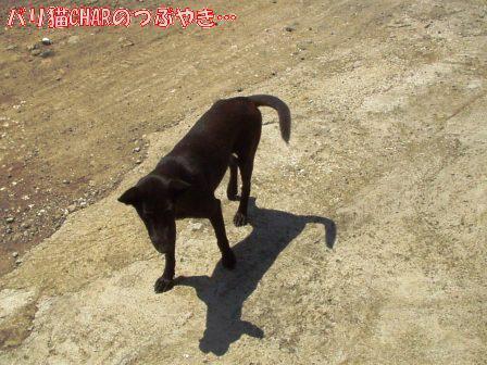 ブログ20101127-5.JPG
