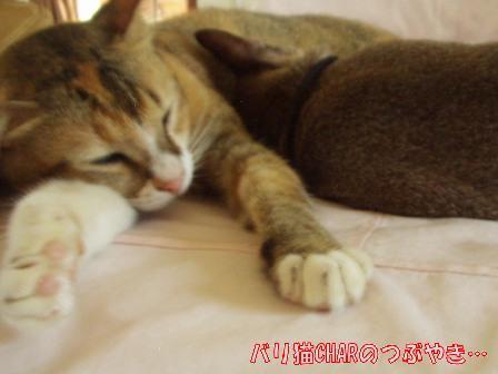 ブログ20101129-2.JPG