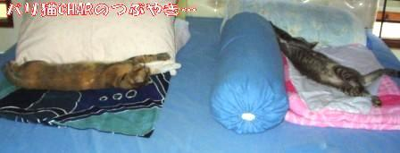 ブログ20101215-4.JPG