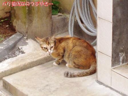 ブログ20101216-1.JPG