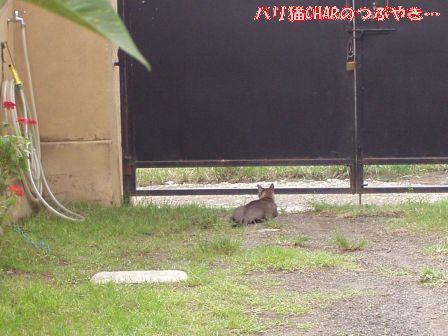 ブログ20101216-4.JPG