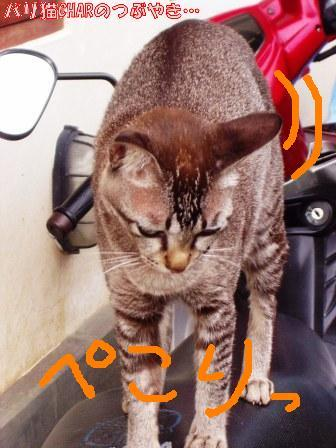 ブログ20101221-2.JPG