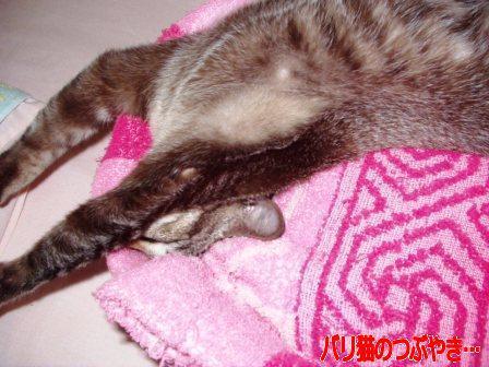 ブログ20110126-2.JPG
