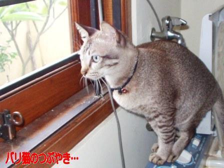 ブログ20110128-1.JPG