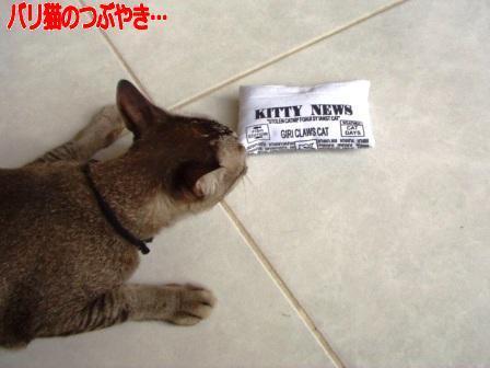 ブログ20110128-2.JPG