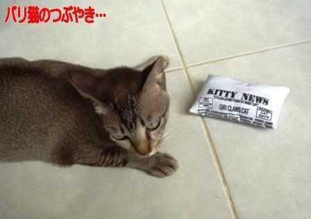 ブログ20110128-3.JPG