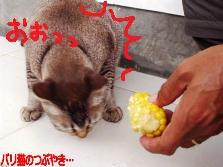 ブログ20110129-4.JPG