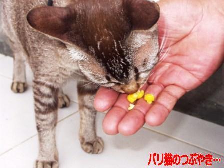 ブログ20110129-5.JPG