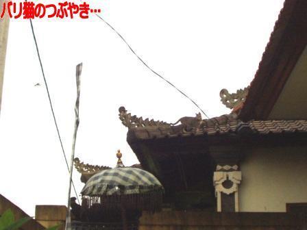 ブログ20110130-2.JPG