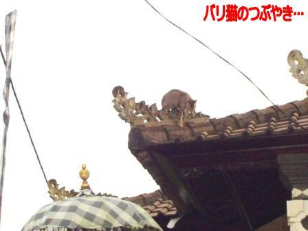 ブログ20110130-4.JPG
