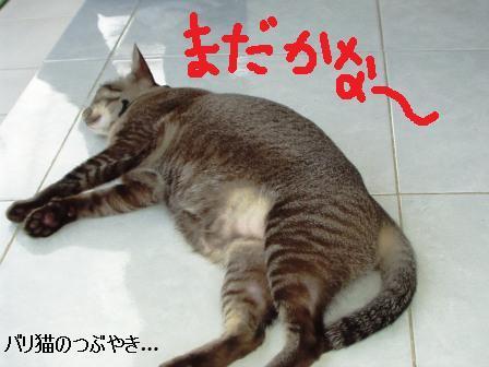 ブログ20110225-6.JPG