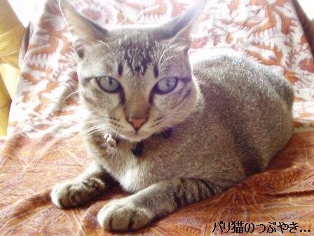 ブログ20110312-1.JPG
