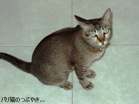 ブログ20110313-1.JPG