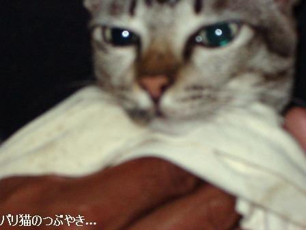 ブログ20110314-1.JPG