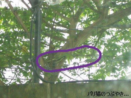 ブログ20110331-7.JPG