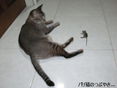 ブログ20110418-6.JPG
