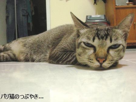 ブログ20110425-1.JPG