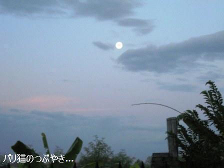 ブログ20110425-2.JPG