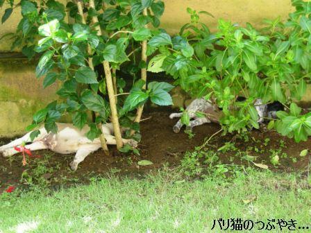 ブログ20110427-1.JPG