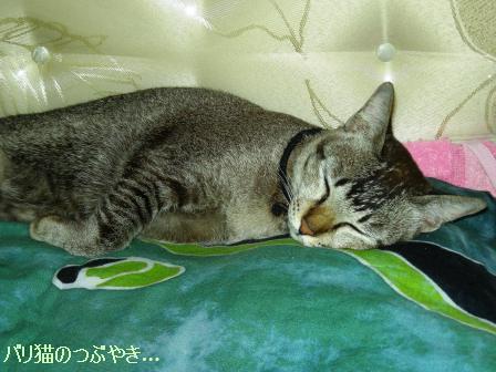 ブログ20110427-4.JPG