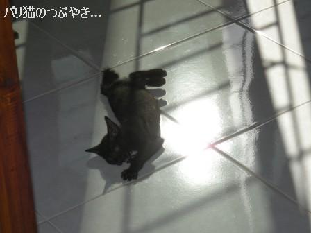 ブログ20110527-2.JPG