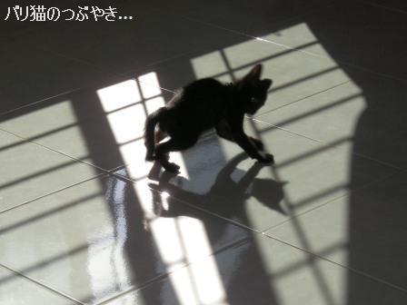 ブログ20110527-4.JPG