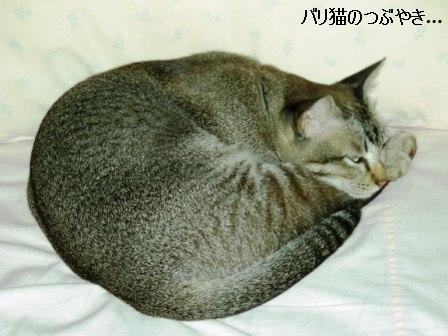 ブログ20110529-1.JPG