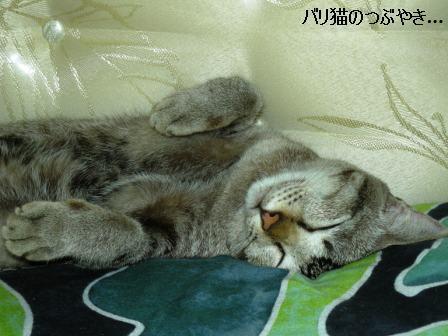 ブログ20110529-3.JPG