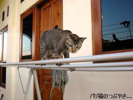 ブログ20110530-2.JPG